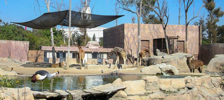 Parte de la diversidad que existe en el Zoológico de Aragón.
