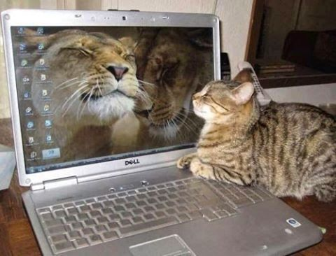 Here's kitty having a video chat with her cousins !