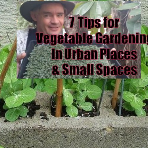 7 Top Tips for Growing Vegetables in small space gardens.  Growing food in the city or suburbs need not to be a chore, but fun and rewarding!  Please RePin this post and share with others!