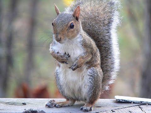 LOOK! CUTE SQUIRREL IN NATURE! rozromilé veverky v přírodě!! Podívejte!