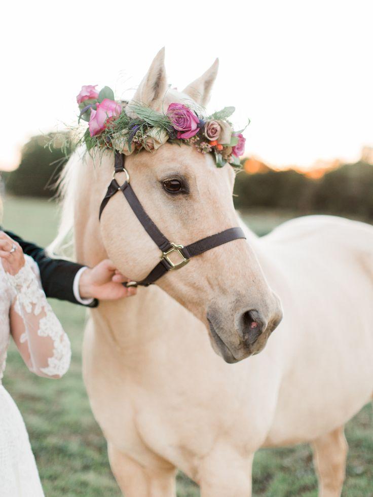 Pferd mit Blumenkrone, Haustier, Hochzeit