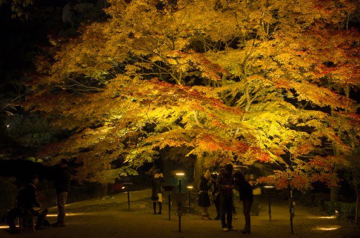 https://flic.kr/p/qao8gz   Mt.Mifune Garden   佐賀県武雄市の御船山楽園です