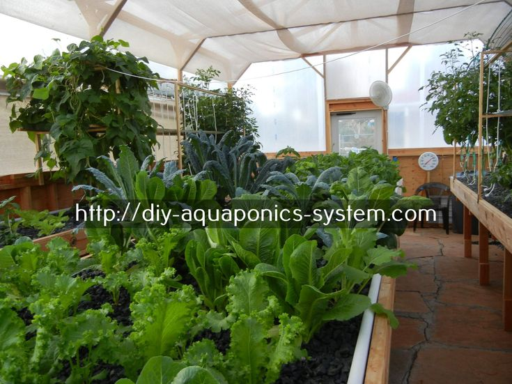 aquaponic pvc design - aquaponics supplies sydney.aquaponics system without electricity 1296210967
