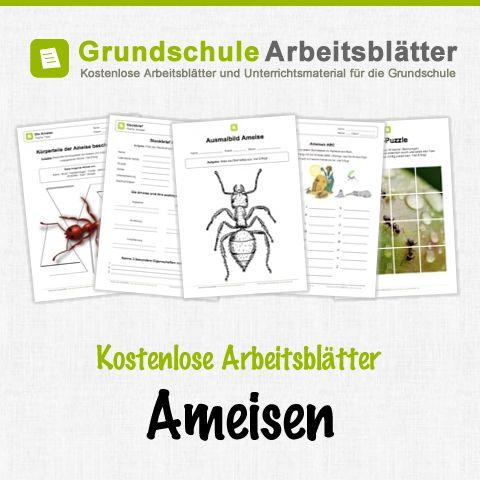 Attractive Lebenszyklus Des Schmetterlings Arbeitsblatt ...