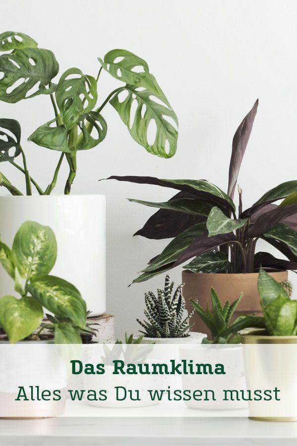 Unser Ratgeber Fur Das Perfekte Raumklima In 2020 Pflanzen Zimmerpflanzen Pflanzenblatter