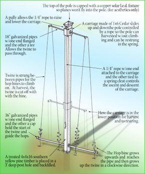 Hop Pole