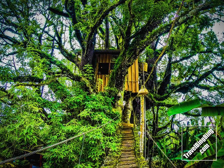 $25 a night to stay in La casa del Ceibo, on the island of San Cristobal, in the Galapagos. A treehouse built in a 300 year old tree. http://travelbingbing.com/?p=4771 ‪#‎Galapagos‬ ‪#‎Ecuador‬ ‪#‎Travel‬