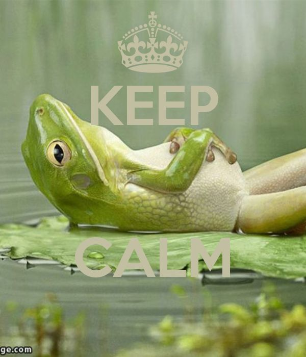 Cute Frog Quotes: 10+ Images About Keep Calm / Quotes On Pinterest