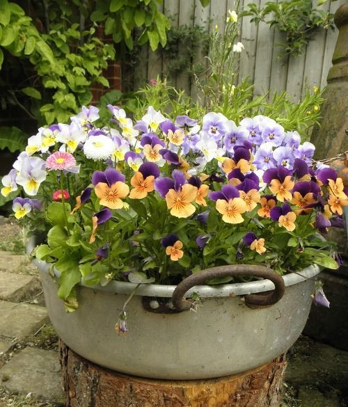 I have a pan like this. I must remember to put violas in it this summer!