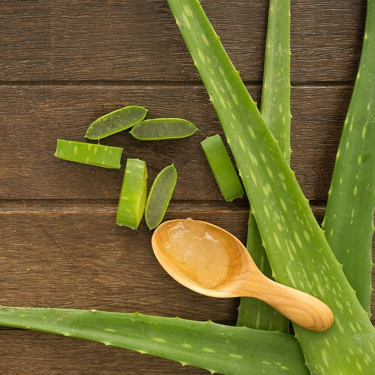 Aloe Vera Benefits, Uses, Dosage and Side Effects
