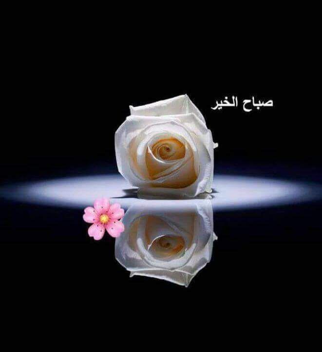 Pin By Hadia Farhood On صباح الخير Good Morning Arabic Good Morning Petals