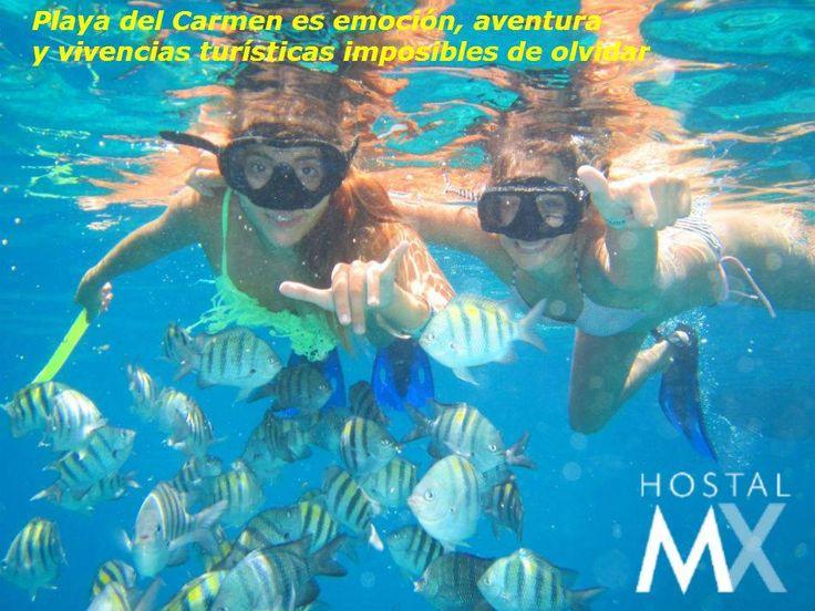 Buceo y esnorquel en Playa del Carmen. Hostal MX Playa del Carmen