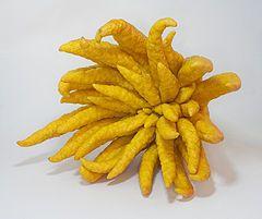 Buddha's Hand Fruit
