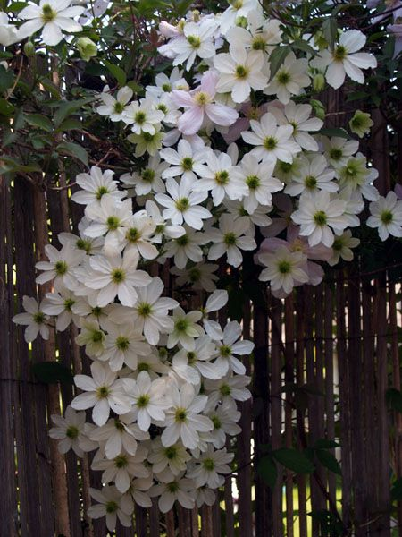 421 Best Images About Very Viney On Pinterest