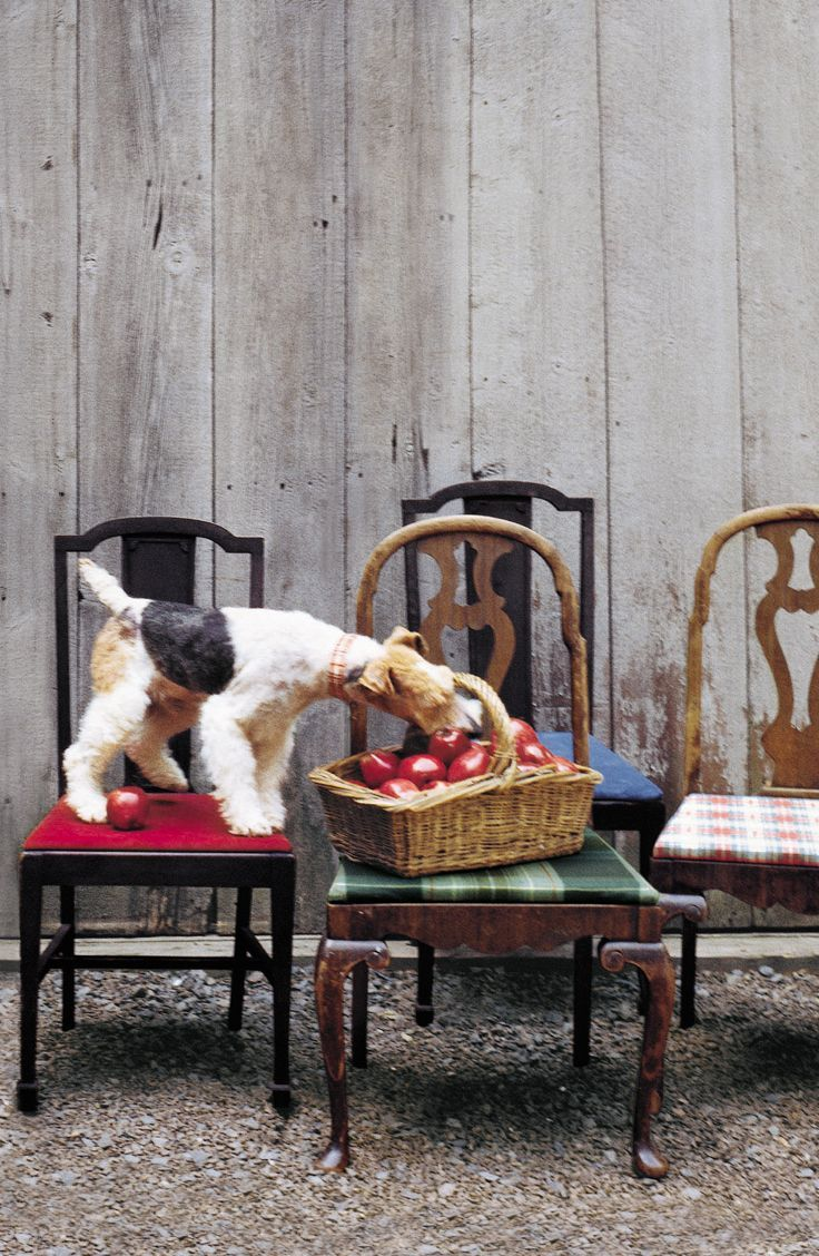 """ralphlauren: """"Picking apples with a friend. Discover the special things from Ralph Lauren Home: here. """""""