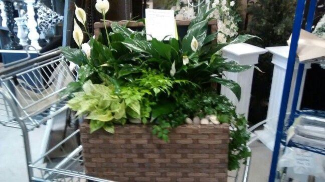 Lush zen garden box