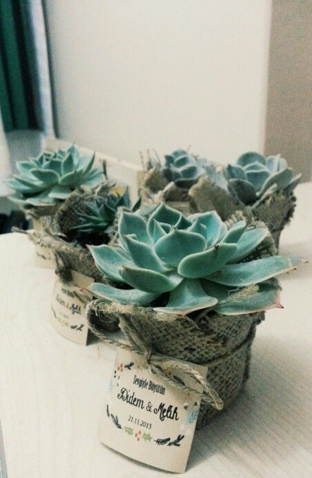 #sukulent #succulent