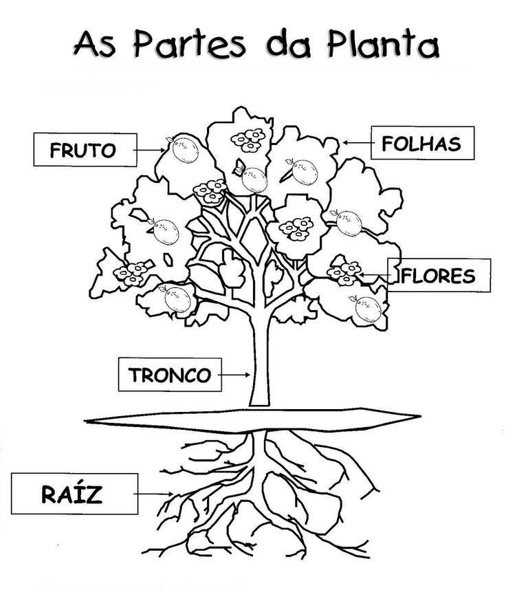 Partes da planta