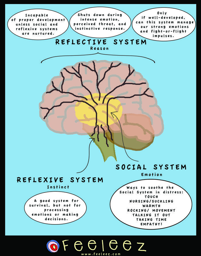 Today we're going on a journey to the center of our brains! I'd liketo introduce youto the Cingulate Cortex. Cingulate Cortex, this is the people. People, Cingulate Cortex.This is one heck of an ...