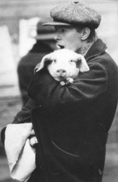 David Bowie holding a pig