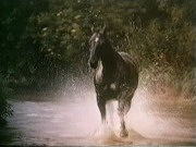 BLACK BEAUTY!!!! From the BBC TV Series 1972-1974