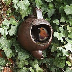 Nesting box for robins made out of a tea pot
