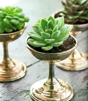 Plant simple succulents in silver vintage champagne glasses for a subtle and sophisticated look. This can also work with clear glasses or a whole array of vintage glasses, vases, and containers....LOVE LOVE LOVE