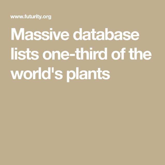Researchers have created the first complete list of all known vascular plant species in the Americas. The searchable database contains 125,000 species representing one-third of all known vascular plants worldwide. Most Western diversity is in South America. The most diverse plant family in the Americas is Orchidaceae, the orchid family, with 12,983 species. It is followed by Asteraceae (12,043 species). Worldwide though, Asteraceae is the biggest followed by the orchids.