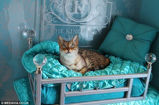 Feline fine: A pampered pooch in the Kingfisher suite's four-poster bed at the Ings Luxury Cat Hotel