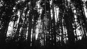Resultado de imagen para imagenes de fondo de pantalla color blanco y negro