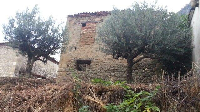 Olive tree, Kalabaka