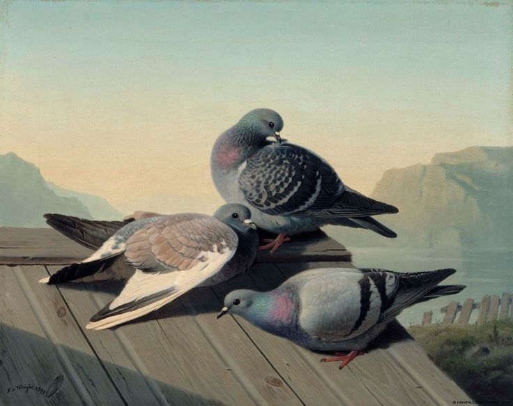 Ferdinand von Wright - Doves on a Roof - 1872