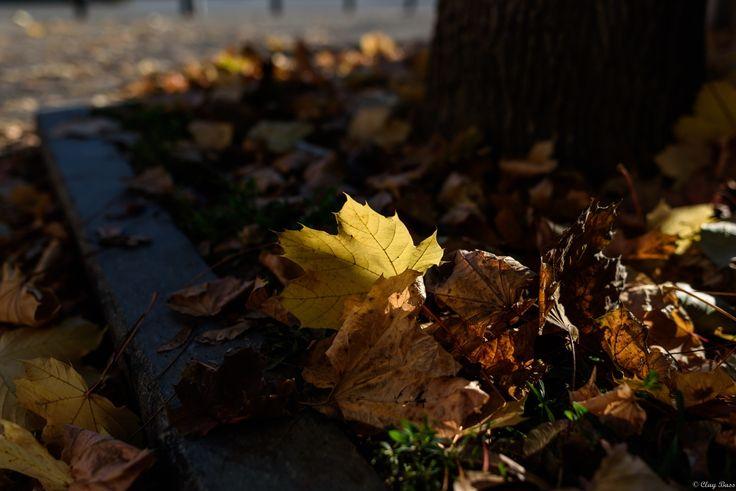 l'autunno a terra - in questi giorni ho visto tante foglie a terra ma questa mi ha colpito particolarmente tanto che mi sono chinato a guardarla