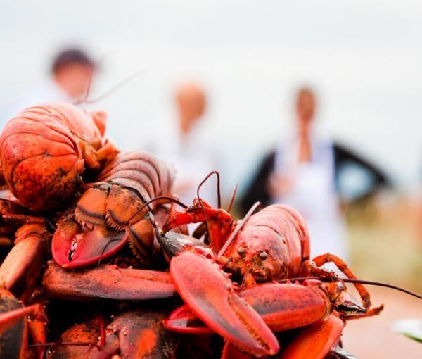 Maine Lobster Festival (642)