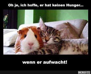 German for all Deutsch für alle: Oh je!