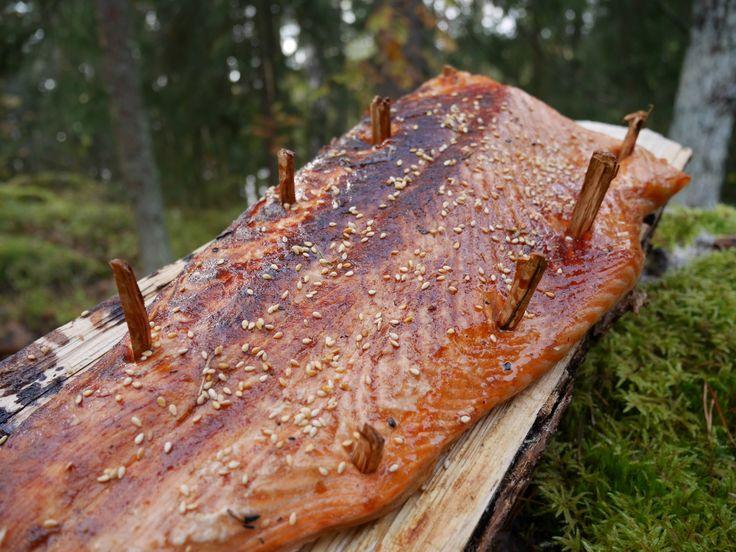 Teriyaki-loimulohi –Nuuksio, + 3 °C, nuotiolla Tarvitseeko perustella, että haluaa metsään? No perustellaan sitten: kaupunki alkaa ahdistamaan ja kesästä on jo aikaa. Metsä tarjoaa tällä hetkellä väriloistoaan ja puolukat ovat parhaimmillaan. Myös ystävien tapaaminen metsässä on kiitollista –... Read More