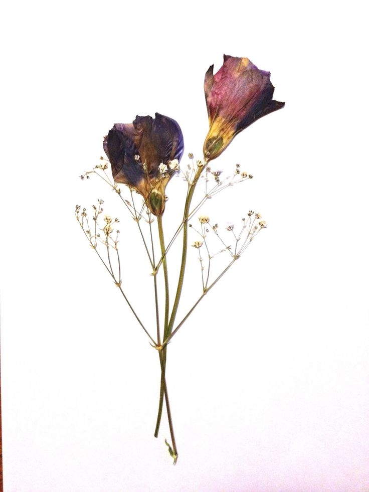 95 best pressed flowers images on Pinterest