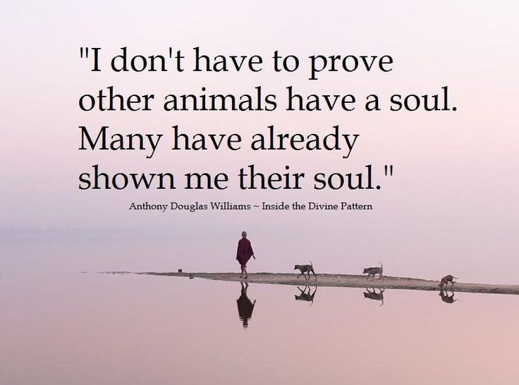 I don't have to prove other animals have a soul. Many have already shown me their soul.