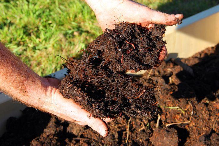 Grundunger Grundungerpflanzen Biologische Dungung Zwischenfrucht Gelber Senf Sonnenblume Container Gardening Vegetables Tomato Fertilizer Backyard Growing