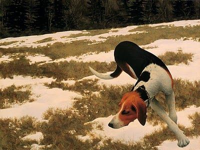 Hound in Field, 1958. Alex Colville
