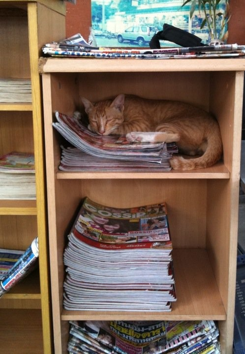 He's not a cat, He's a 'book worm'