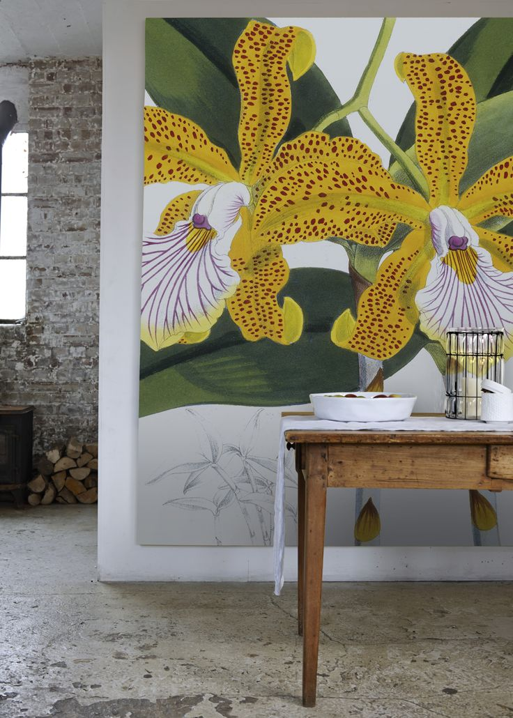 'Cattleya Velutina' Canvas - The Royal Horticultural Society from £145 | Shop Canvases & Wall Murals at surfaceview.co.uk