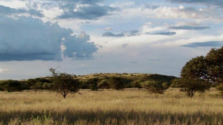 Game Farm  in Kimberley