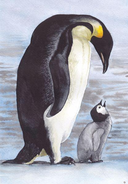 Пингвины  Евгений Лебедев - Graffika