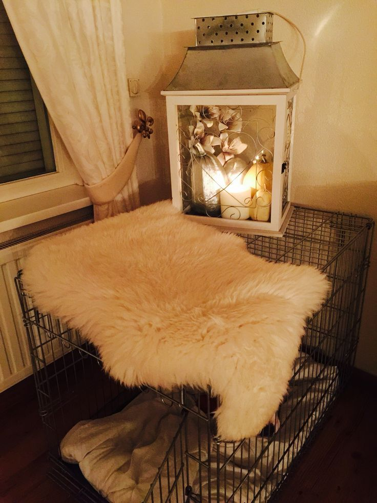 De bench opvrolijken van de hond.. Wit met zilveren kleuren. Witte pompoenen en een paar gespoten in zilver (verfspuitbus bij de action)