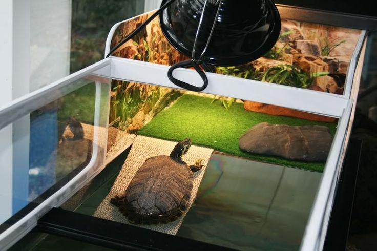 37 Best Turtle Tank Images On Pinterest Turtle Tanks Turtles And Tortoise Habitat