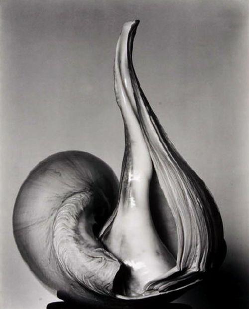 on something, Edward Weston - Shells