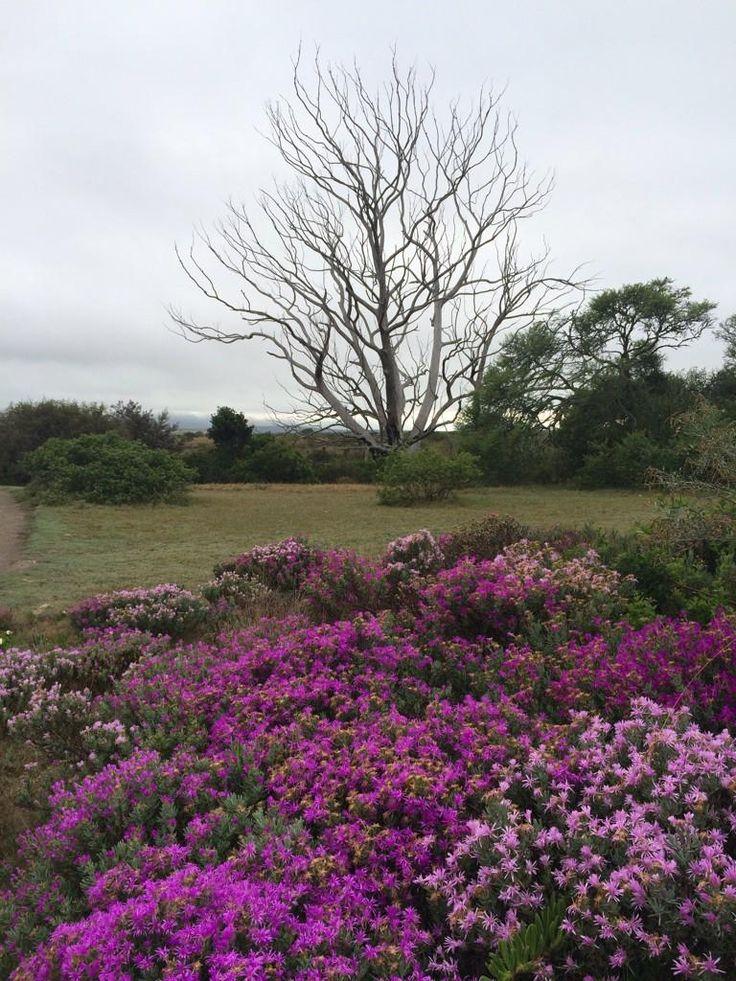 Beautiful Bontebok National Park #Swellendam #wcape #Bontebok #SANParks @intheOverberg @swellendam1