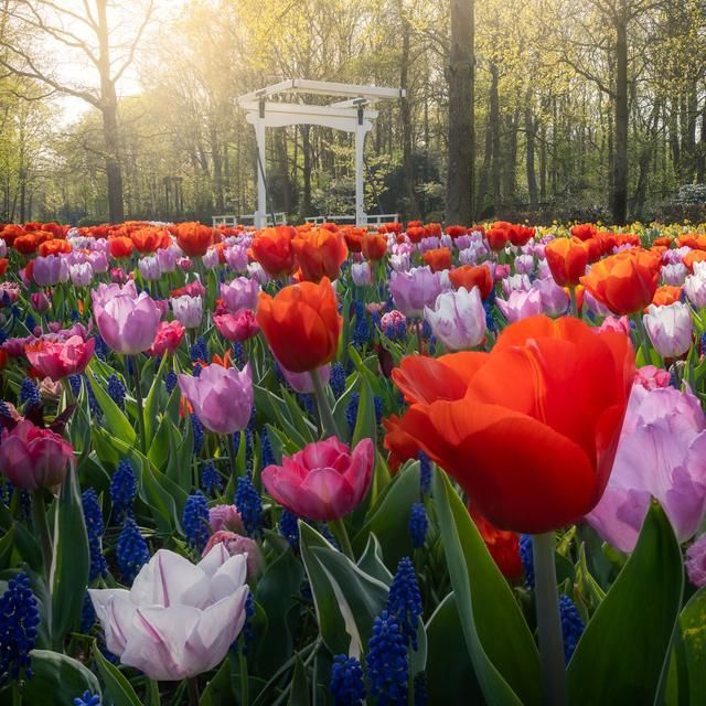 The Most Beautiful Flower Garden In The World Without People My 31 Pics In 2020 Beautiful Flowers Garden Most Beautiful Flowers Tulips Garden