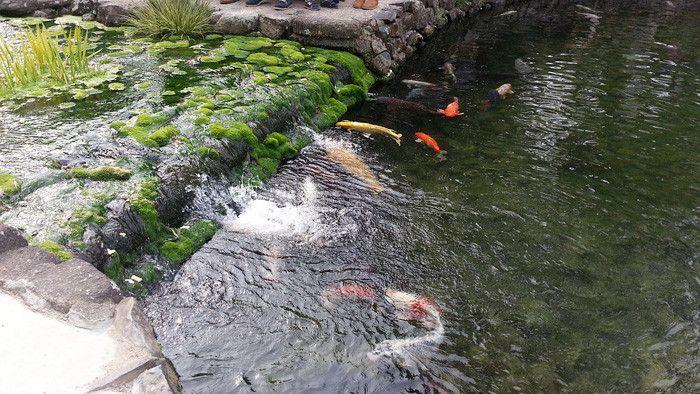 栗林公園 香川,高松